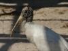 110216_mote_birds16