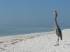 110216_sarasota_beach08