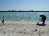110216_sarasota_beach15