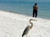 110216_sarasota_beach23