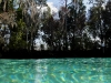 110218_crystal_river14