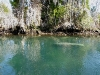 110218_crystal_river35