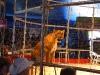 110219_circus_show11