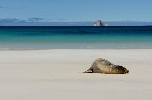 Leon Dormida - Sleeping sea lion at Lion Rock